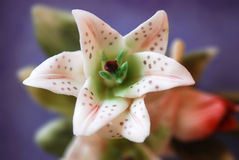 bloem stock fotografie