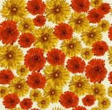 Bloem, aard, bloemen, gele bloemen, gerbera, sinaasappel, tuin, madeliefje, flora, de zomer, bloesem, de lente, mooie schoonheid, stock illustratie