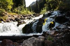 Bloem bij een bergwaterval Stock Foto