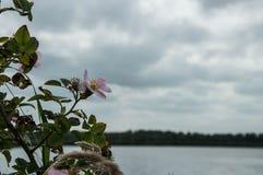 Bloem bij het meer Stock Foto's