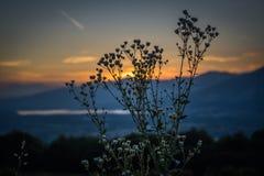 Bloem bij zonsondergang over het meer van annonelecco van consonnobrianza royalty-vrije stock foto's