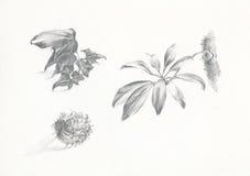 Bloem, bladeren en dienst royalty-vrije illustratie