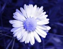 Bloem in Blauw Royalty-vrije Stock Afbeelding