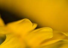 Bloem in bloei stock foto