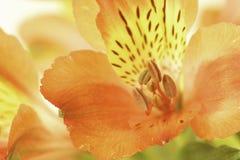 Bloem bloemenachtergrond Stock Afbeelding