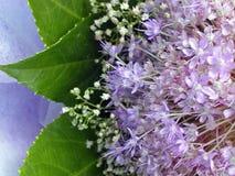bloem boeket Stock Afbeeldingen