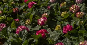 bloem in de beelden van de tuinvoorraad royalty-vrije stock afbeelding