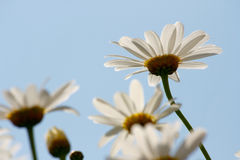 Bloem in de lente Stock Fotografie
