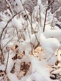 Bloem in de sneeuw royalty-vrije stock foto's