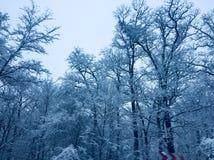 Bloem in de sneeuw royalty-vrije stock afbeelding