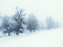 Bloem in de sneeuw Stock Afbeeldingen