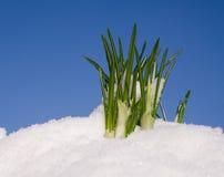 Bloem in de sneeuw royalty-vrije stock foto