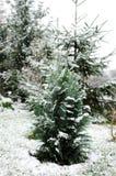 Bloem in de sneeuw Royalty-vrije Stock Afbeeldingen