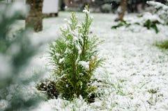 Bloem in de sneeuw Stock Foto's