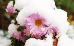 Bloem in de sneeuw! Stock Foto