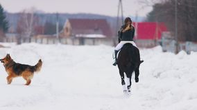 Bloem in de sneeuw Een vrouw die een paard in een dorp met een hond berijden die dichtbij door hen lopen stock video