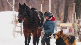 Bloem in de sneeuw Een vrouw plaatst het zadel op het paard stock video