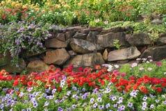 bloem in de tuin Stock Afbeeldingen