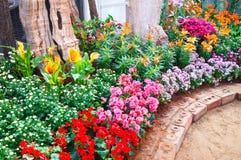 Bloem in de tuin Stock Fotografie