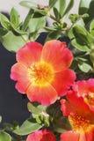 Bloem in de tuin Stock Foto