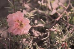 Bloem in de tuin Royalty-vrije Stock Fotografie