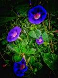 Bloem in de tuin stock foto's