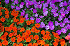 Bloem in de tuin Royalty-vrije Stock Foto's
