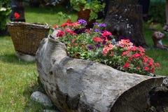 Bloem in de tuin royalty-vrije stock afbeeldingen
