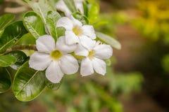 Bloem in de tuin op een regenachtige dag Stock Foto's