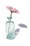Bloem in de Vaas van het Glas Stock Foto