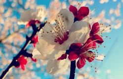 Bloem in de volledige lente Royalty-vrije Stock Afbeeldingen