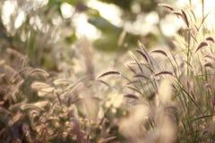 Bloem in de zonneschijn Stock Foto's