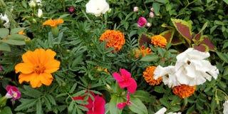 Bloem die in tuin bloeien Stock Fotografie