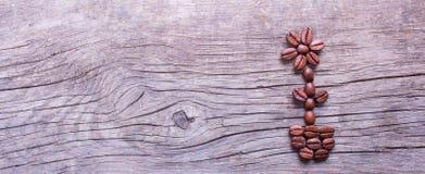 Bloem in een pot van koffiebonen Stock Foto