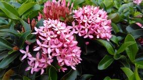 Bloem in een roze Stock Foto's