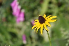 Bloem in een tuin stock afbeelding