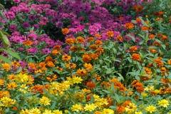 Bloem en colorflu Royalty-vrije Stock Foto's