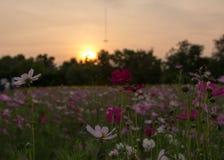 Bloem en donkere zonsondergang Royalty-vrije Stock Afbeelding