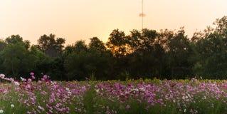 Bloem en donkere zonsondergang Royalty-vrije Stock Foto