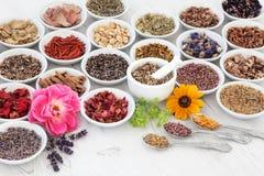 Bloem en Herb Medicine royalty-vrije stock afbeelding