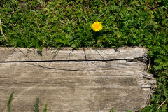 Bloem en houten raad Stock Afbeeldingen