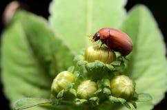 Bloem en insect Stock Fotografie