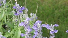 Bloem en insect in tuin stock videobeelden