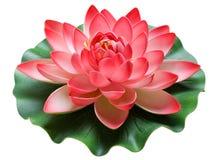 Bloem en lotusbloem Royalty-vrije Stock Afbeeldingen