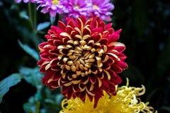 Bloem en mooie bloemblaadjes Stock Afbeeldingen