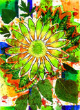 Bloem en Samenvatting en de zomer en vierkant Royalty-vrije Stock Afbeelding