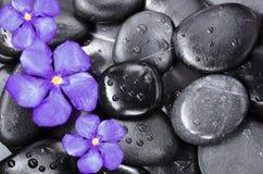 Bloem en stenen stock fotografie