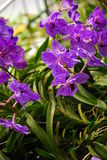 Bloem en tuin in Thailand Royalty-vrije Stock Afbeeldingen