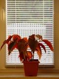 Bloem en venster Stock Foto