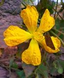 Bloem en vlinder stock afbeeldingen